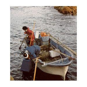 abalone-harvest05