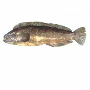 bouzuginpo