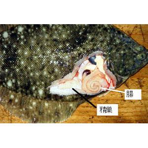 dissect-flatfish03