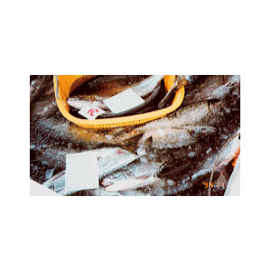 fish-market01