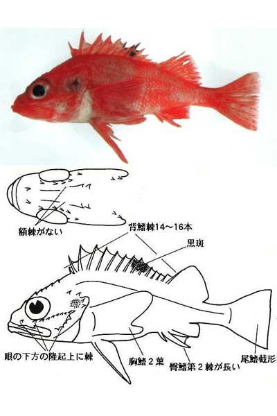 kichiji