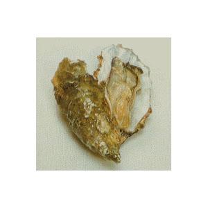 oyster-farming05