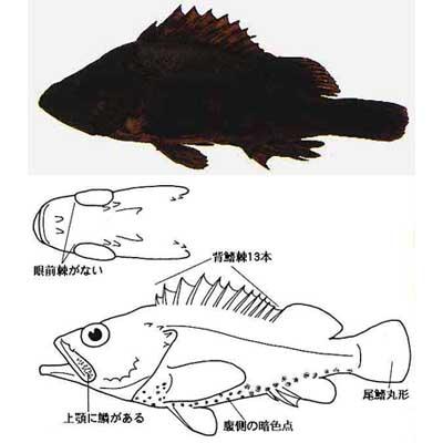 takenokomebaru