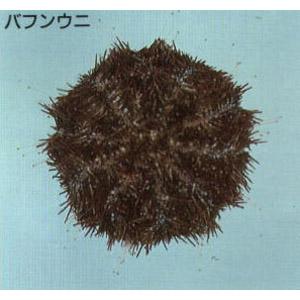 urchin04