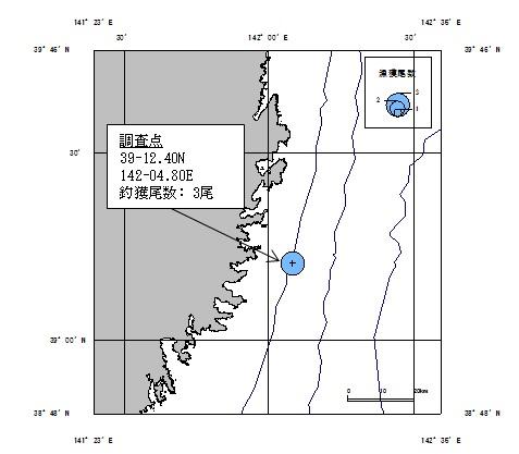20170714squid_fishing001