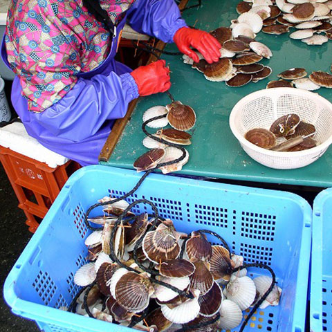 0021scallop_farming