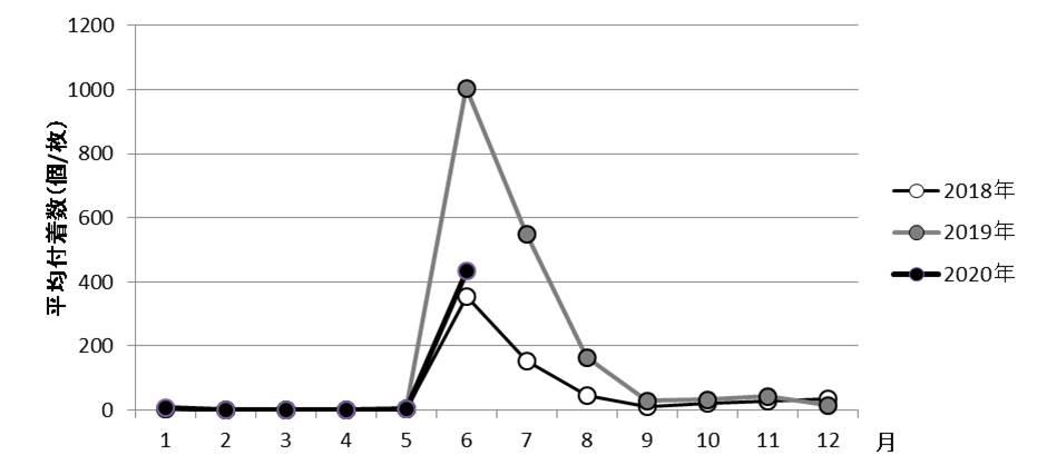 図2 山田湾定点におけるヨーロッパザラボヤの平均付着数の推移